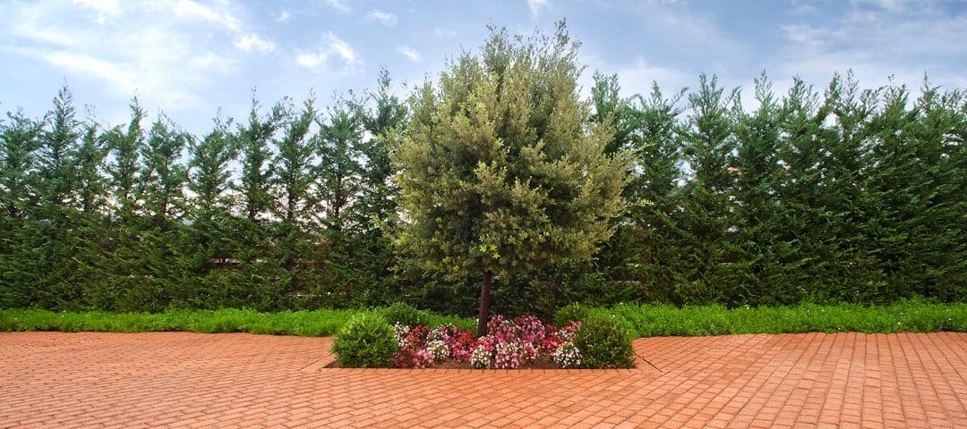 Δένδρα